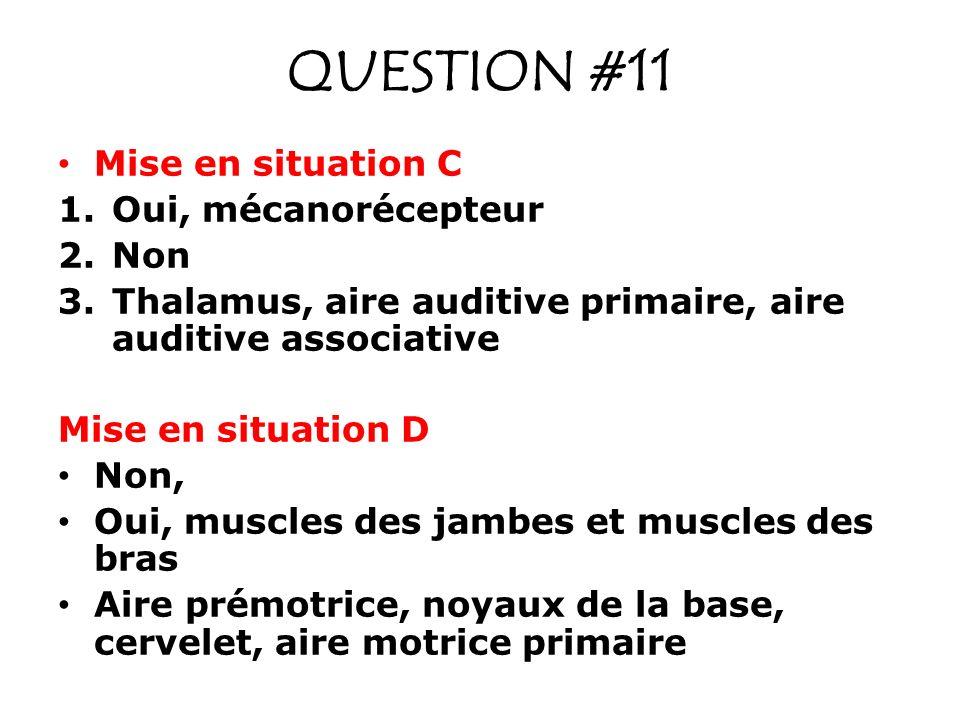 QUESTION #11 Mise en situation C Oui, mécanorécepteur Non