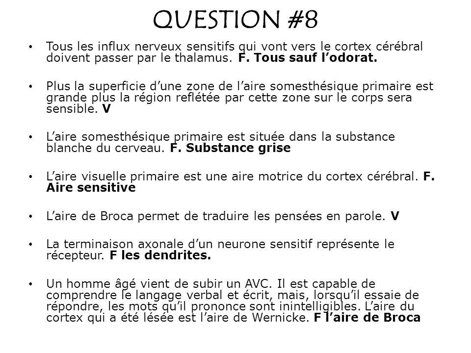 QUESTION #8 Tous les influx nerveux sensitifs qui vont vers le cortex cérébral doivent passer par le thalamus. F. Tous sauf l'odorat.