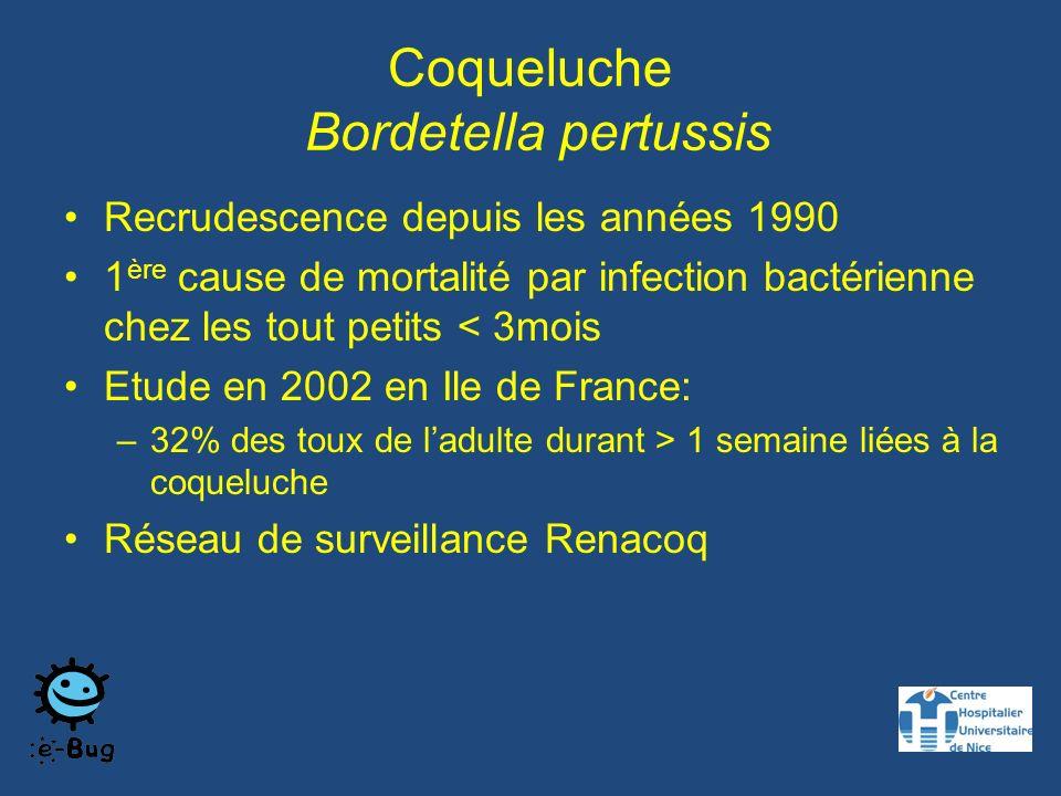 Coqueluche Bordetella pertussis