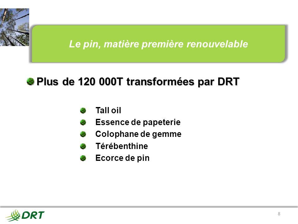 Le pin, matière première renouvelable