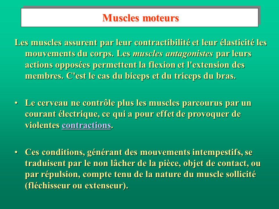 Muscles moteurs
