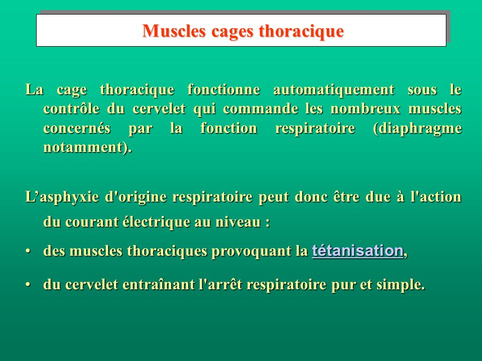 Muscles cages thoracique