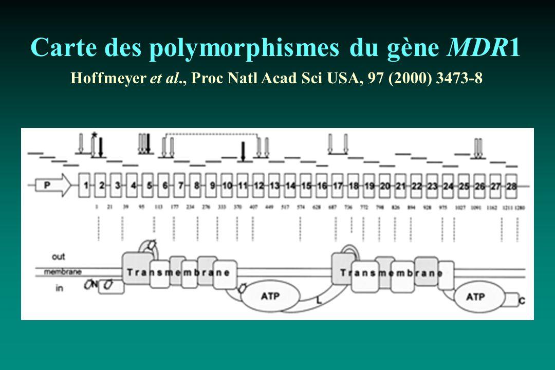 Carte des polymorphismes du gène MDR1