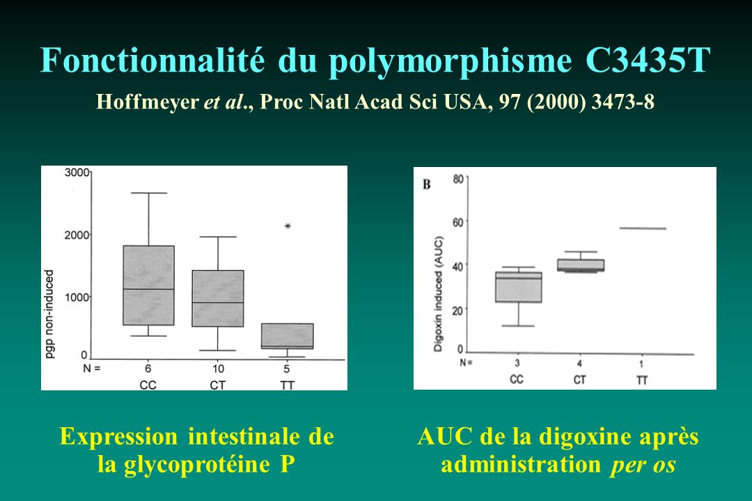 Fonctionnalité du polymorphisme C3435T