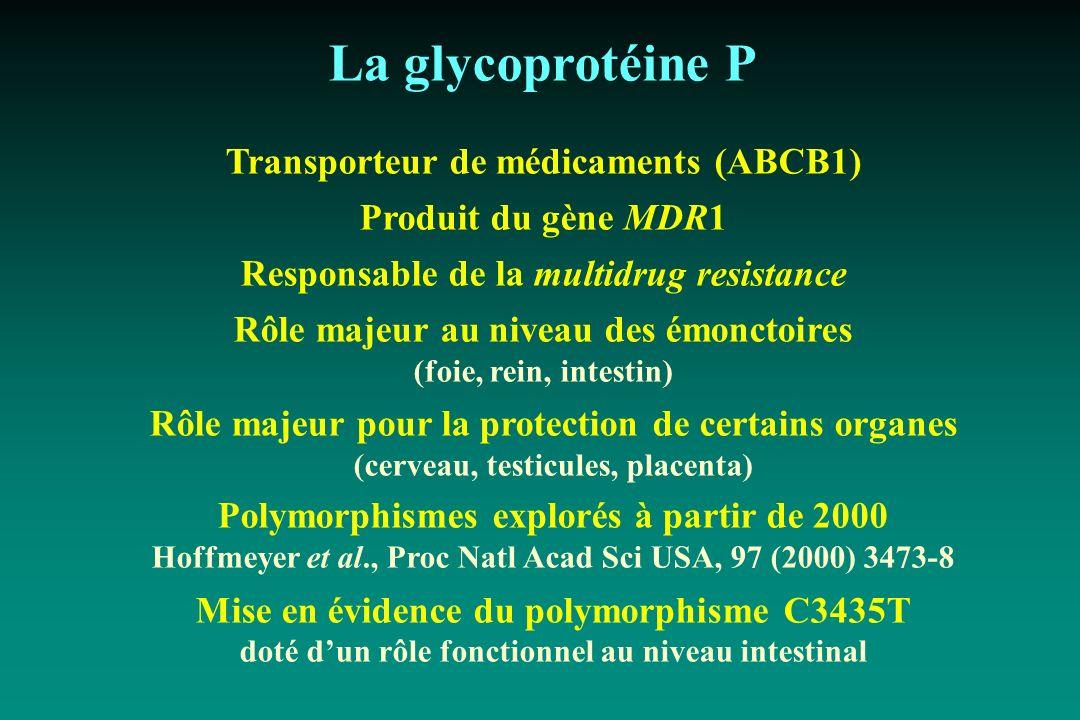 La glycoprotéine P Transporteur de médicaments (ABCB1)