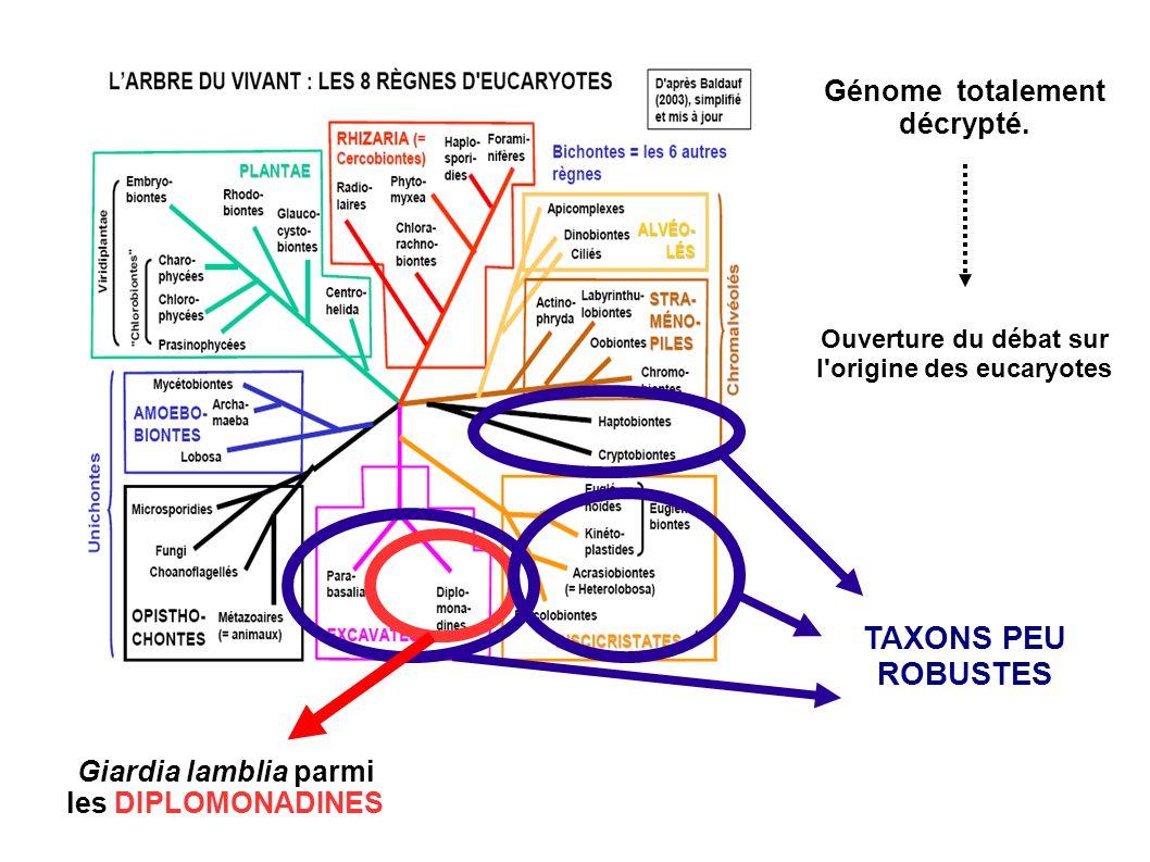 TAXONS PEU ROBUSTES Génome totalement décrypté. Giardia lamblia parmi