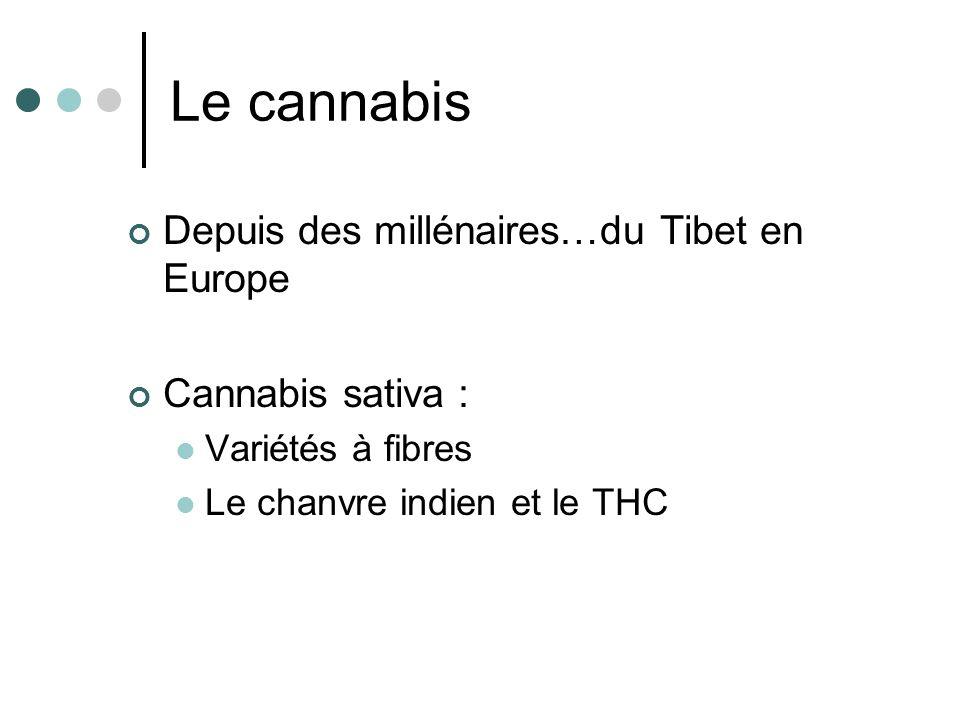 Le cannabis Depuis des millénaires…du Tibet en Europe