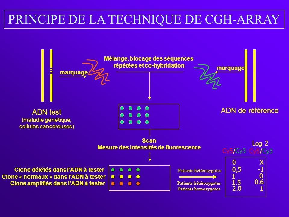 PRINCIPE DE LA TECHNIQUE DE CGH-ARRAY