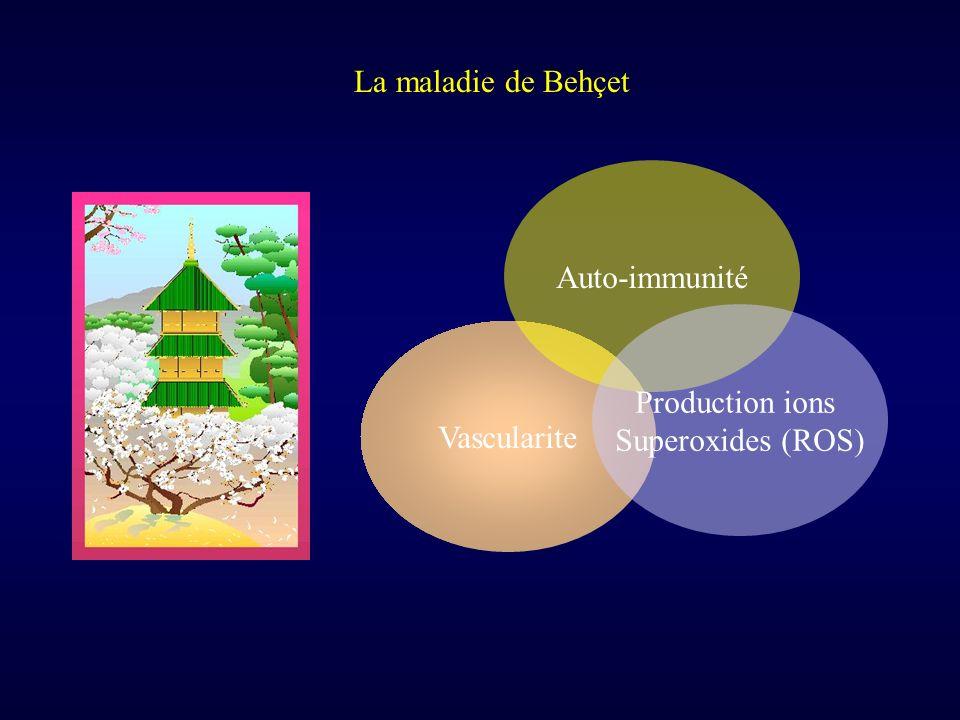 La maladie de Behçet Auto-immunité Production ions Superoxides (ROS) Vascularite