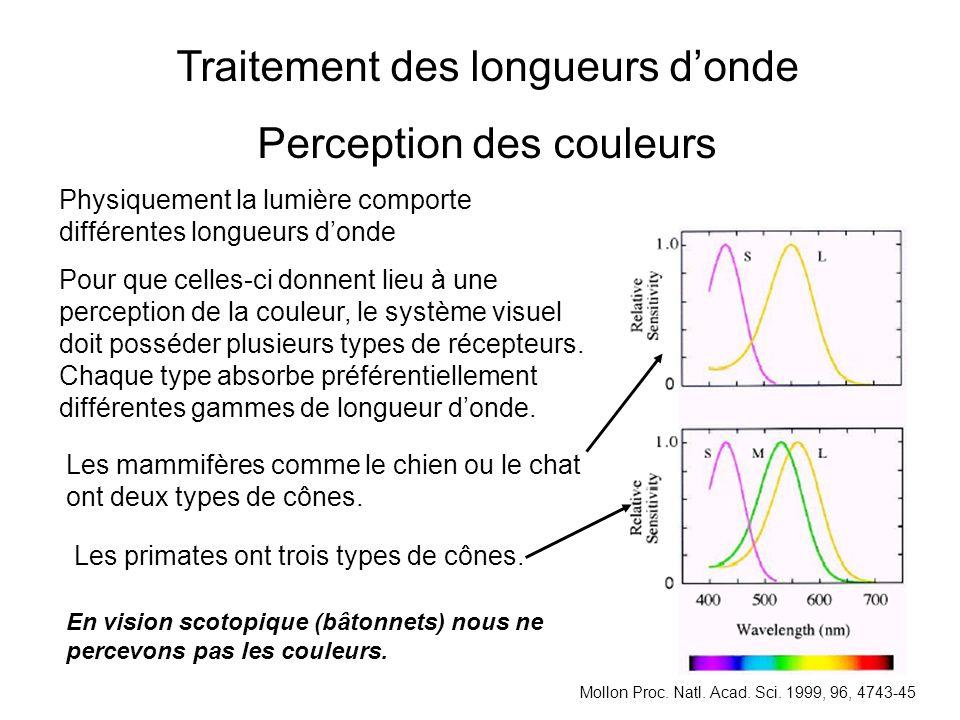 Traitement des longueurs d'onde Perception des couleurs