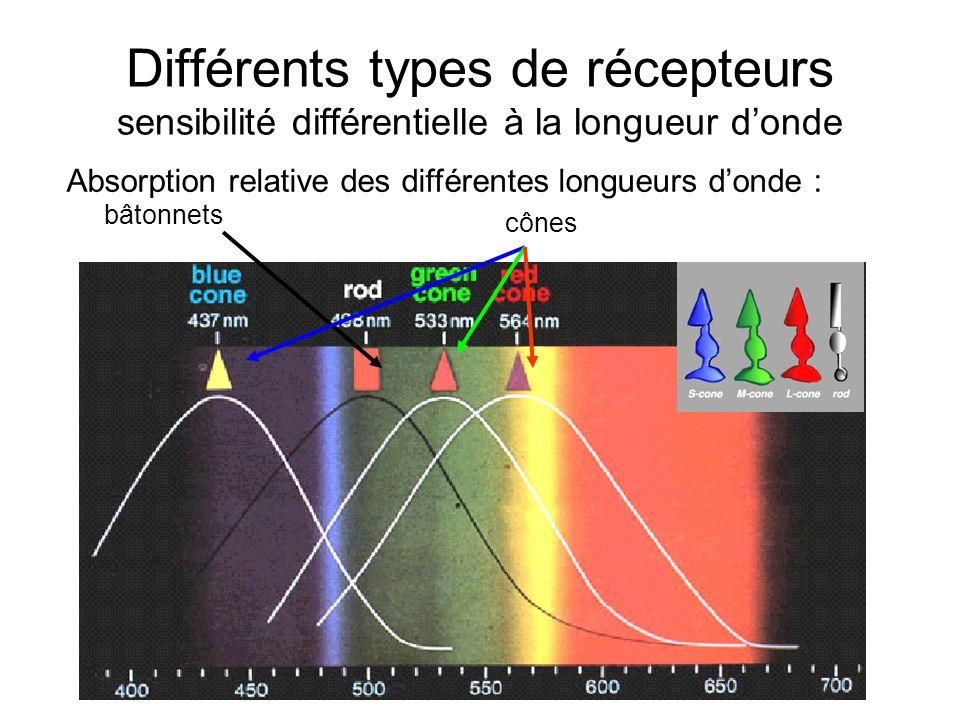 Différents types de récepteurs sensibilité différentielle à la longueur d'onde