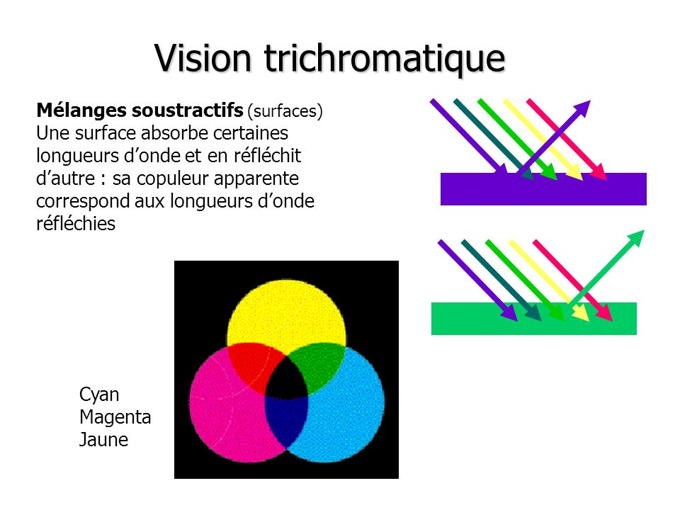 Vision trichromatique