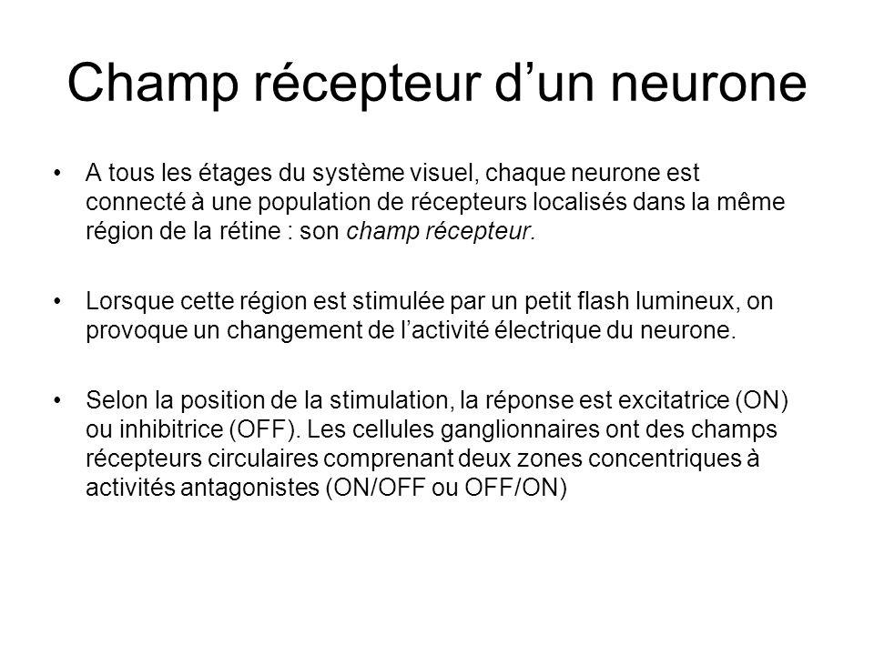 Champ récepteur d'un neurone
