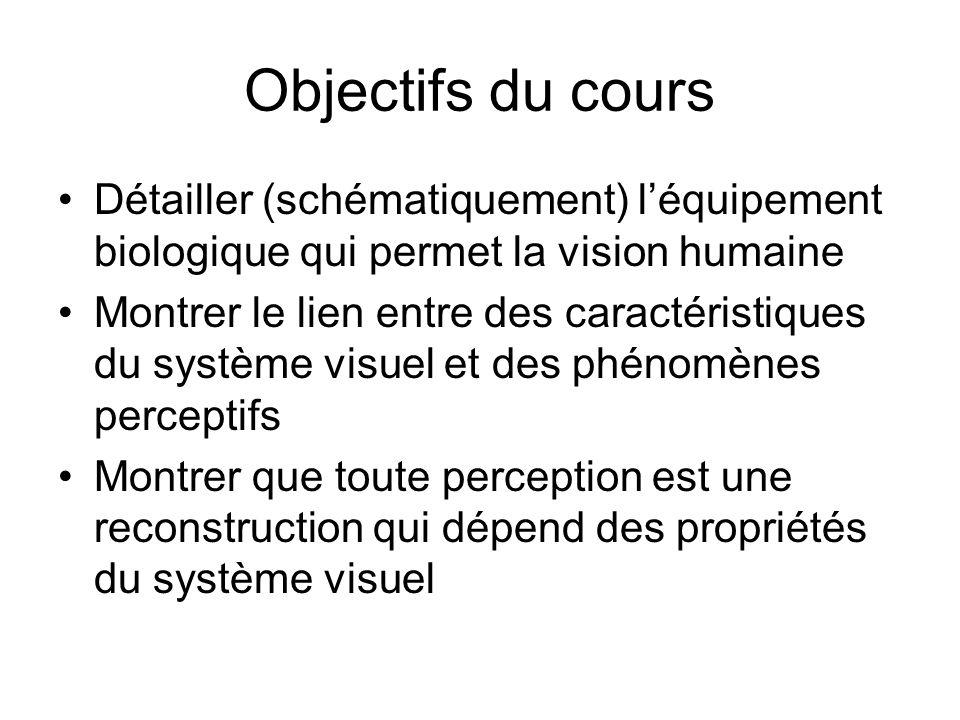 Objectifs du cours Détailler (schématiquement) l'équipement biologique qui permet la vision humaine.