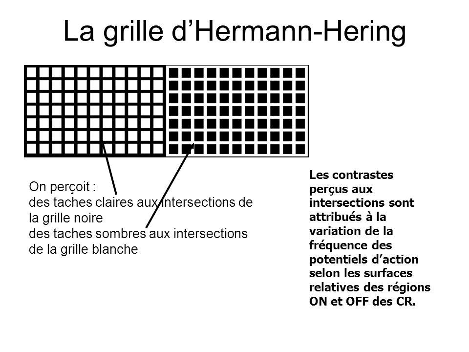La grille d'Hermann-Hering