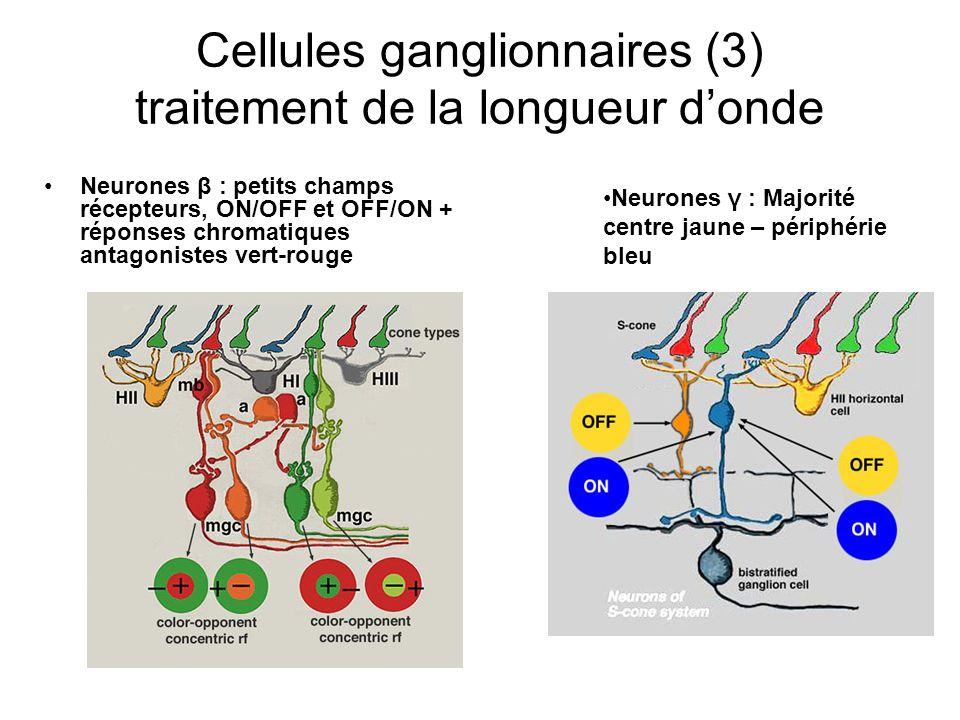 Cellules ganglionnaires (3) traitement de la longueur d'onde