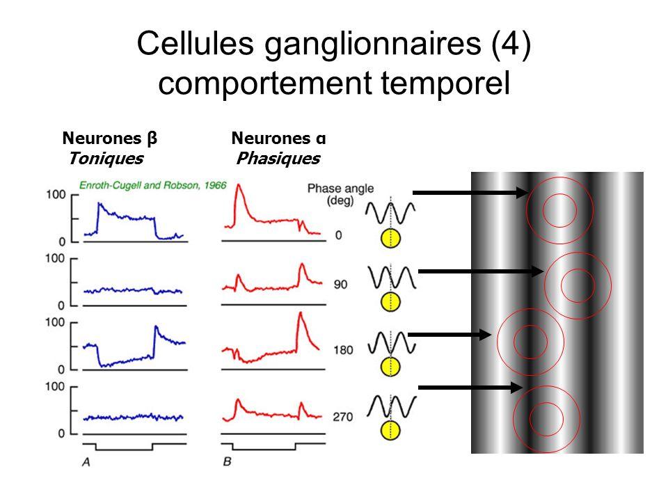 Cellules ganglionnaires (4) comportement temporel