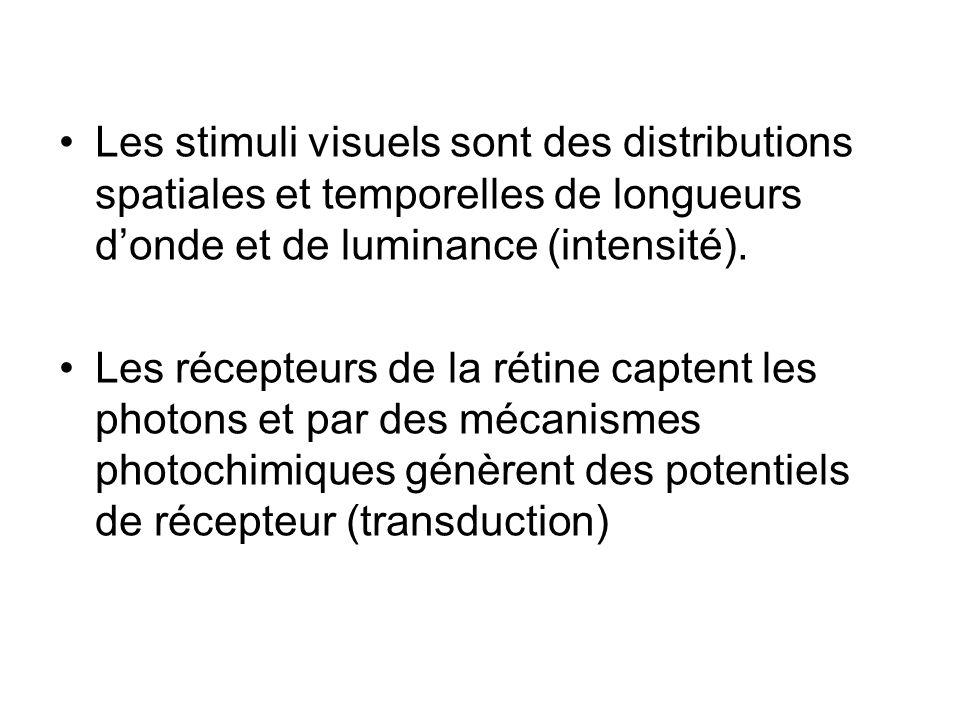 Les stimuli visuels sont des distributions spatiales et temporelles de longueurs d'onde et de luminance (intensité).