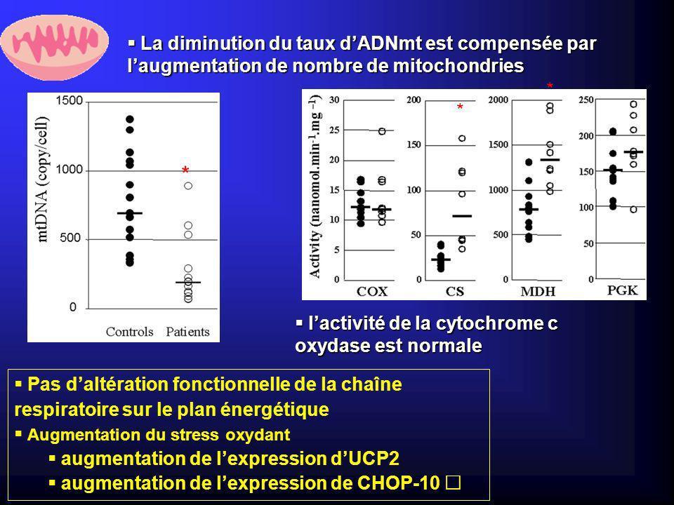 La diminution du taux d'ADNmt est compensée par l'augmentation de nombre de mitochondries