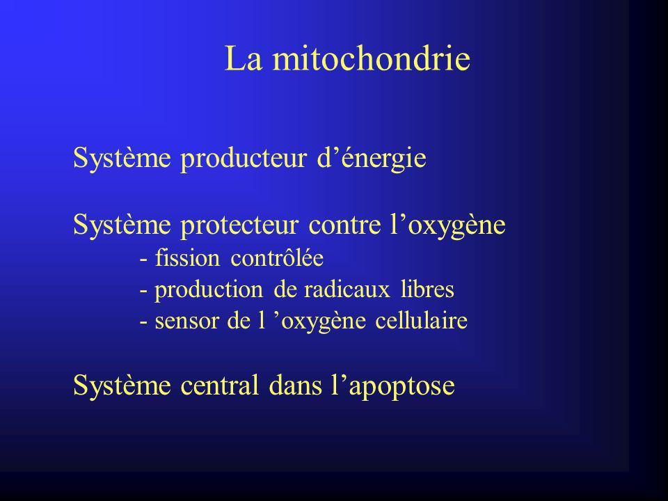 La mitochondrie Système producteur d'énergie