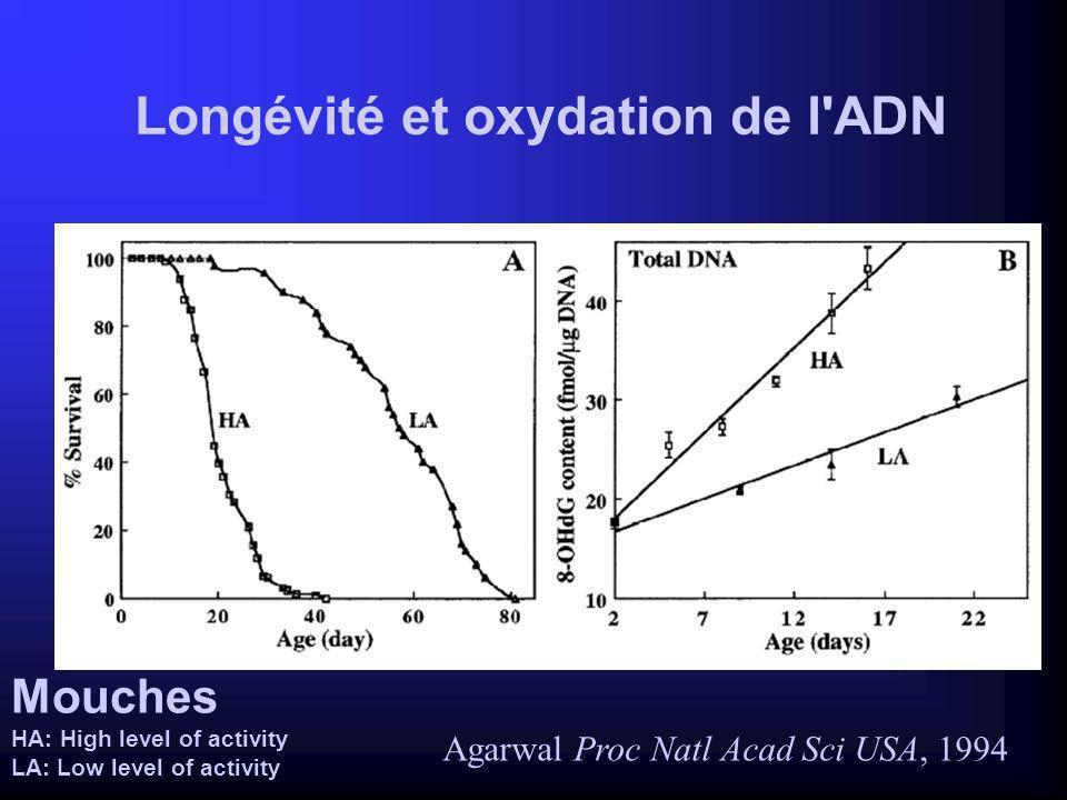 Longévité et oxydation de l ADN