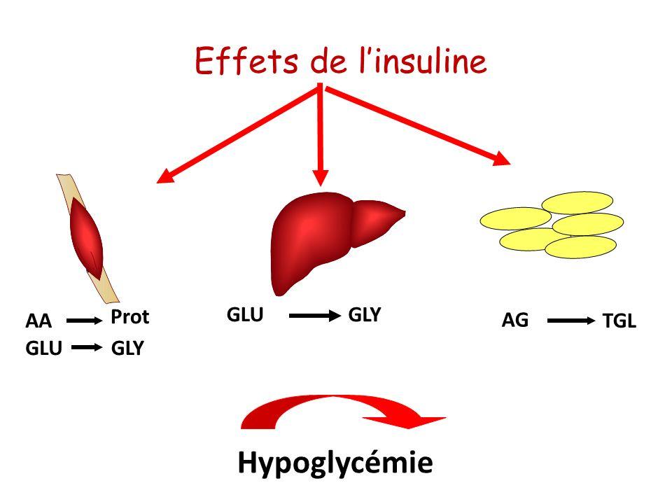 Effets de l'insuline Prot GLU GLY AA AG TGL GLU GLY Hypoglycémie