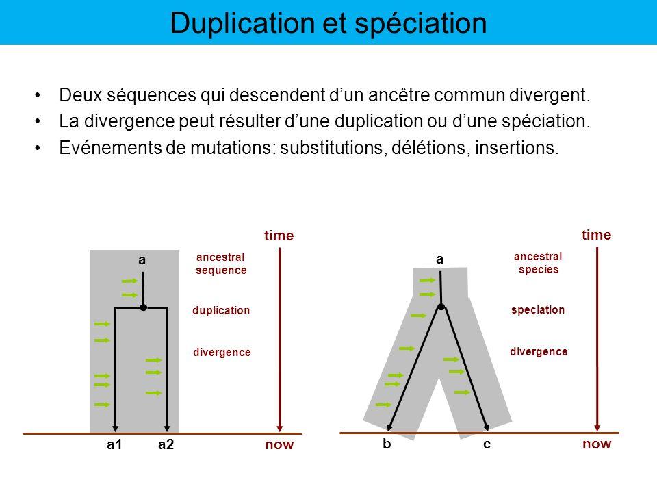 Duplication et spéciation