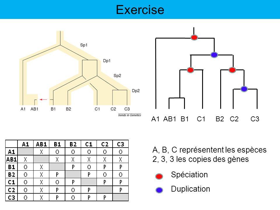Exercise A, B, C représentent les espèces 2, 3, 3 les copies des gènes