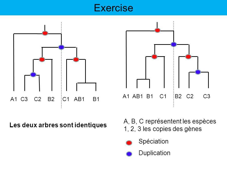 Exercise A, B, C représentent les espèces