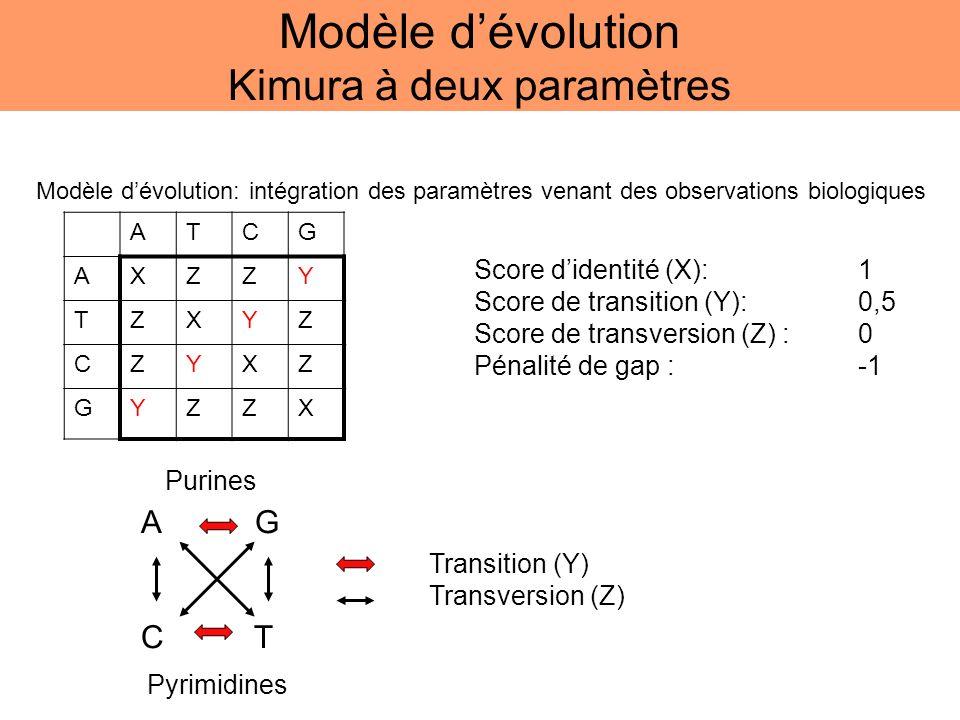 Modèle d'évolution Kimura à deux paramètres
