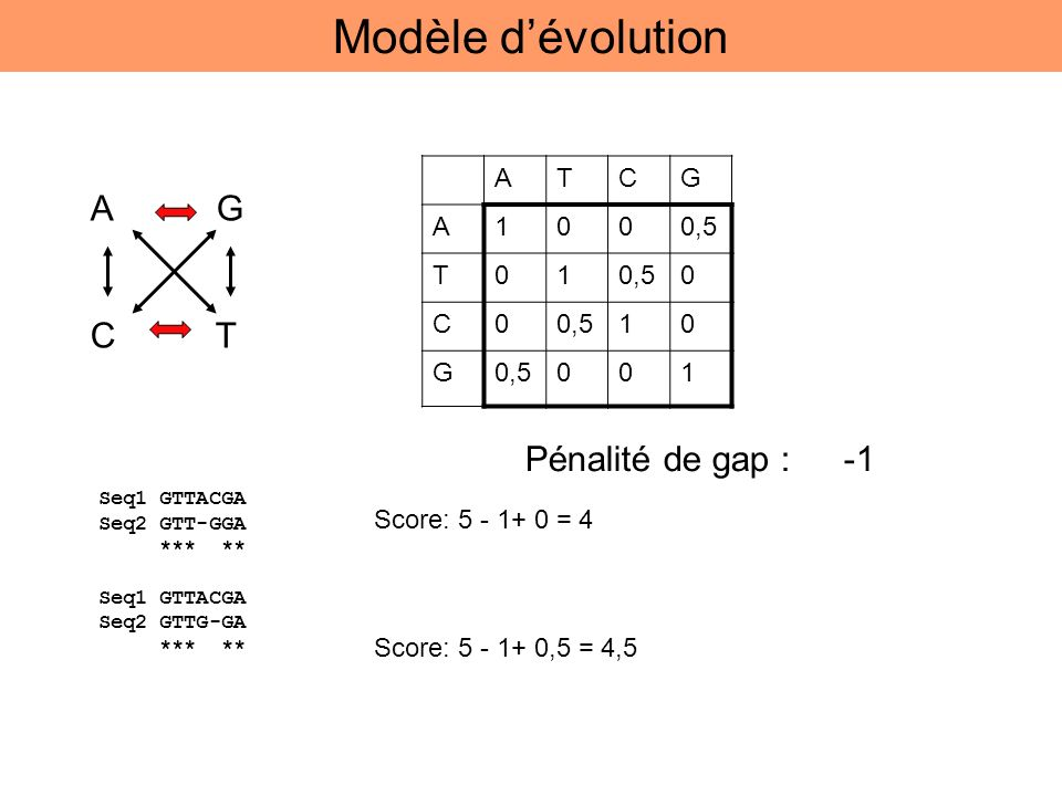 Modèle d'évolution A G C T Pénalité de gap : -1 A T C G 1 0,5