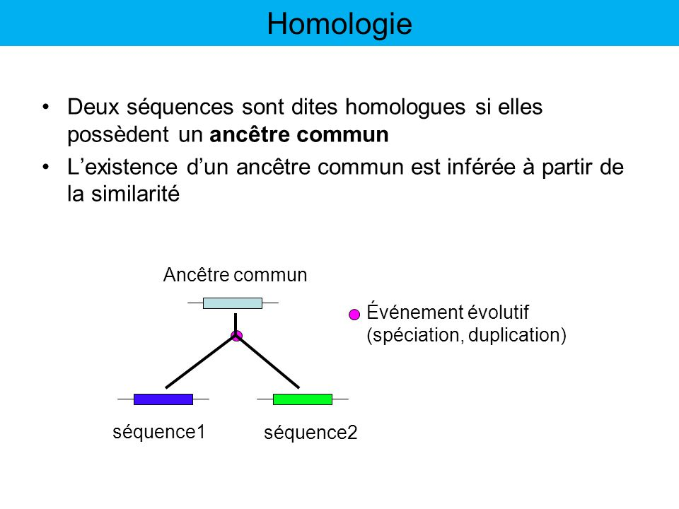 Homologie Deux séquences sont dites homologues si elles possèdent un ancêtre commun.