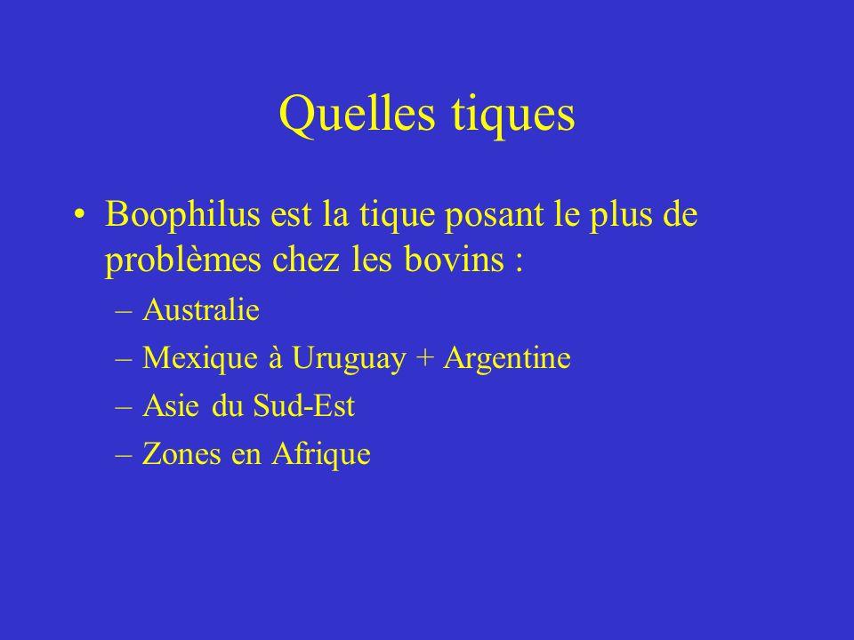 Quelles tiques Boophilus est la tique posant le plus de problèmes chez les bovins : Australie. Mexique à Uruguay + Argentine.