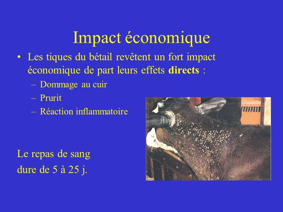 Impact économique Les tiques du bétail revêtent un fort impact économique de part leurs effets directs :