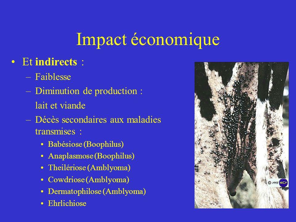 Impact économique Et indirects : Faiblesse Diminution de production :