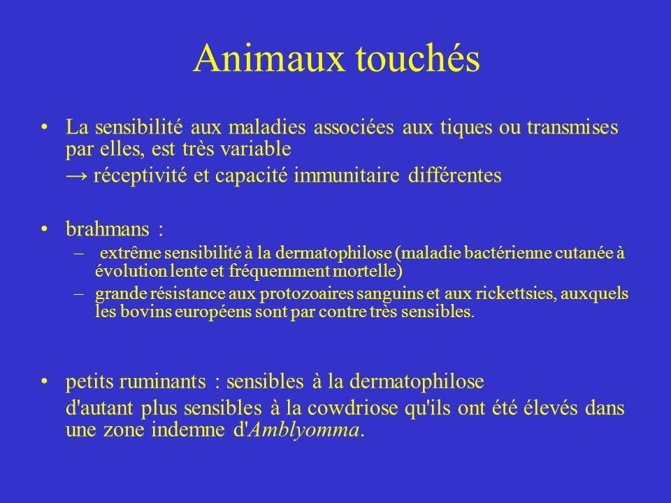 Animaux touchés La sensibilité aux maladies associées aux tiques ou transmises par elles, est très variable.