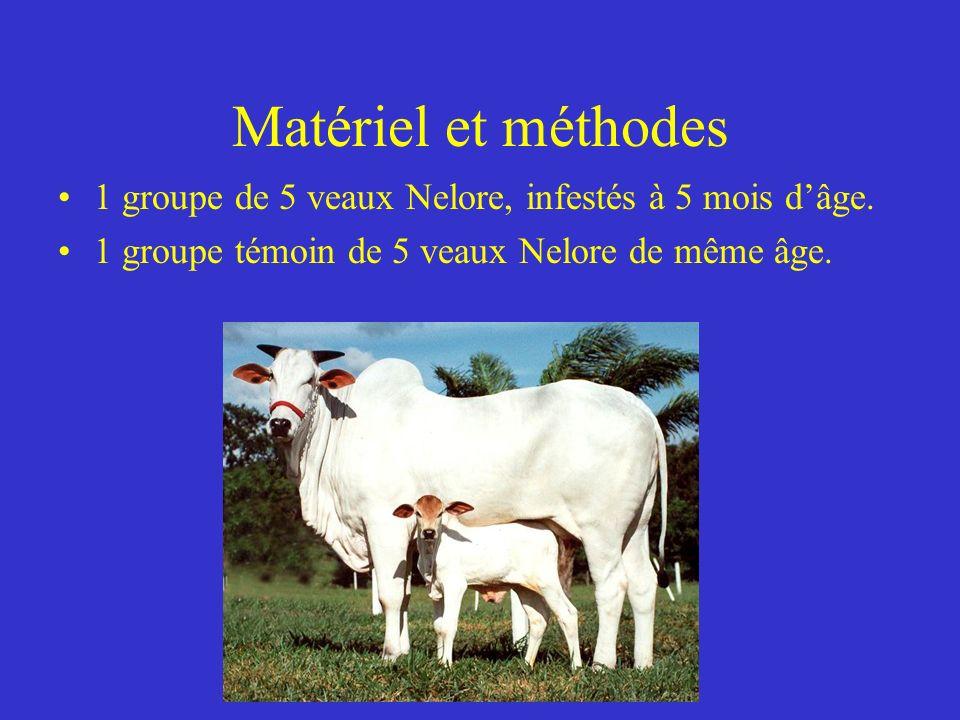Matériel et méthodes 1 groupe de 5 veaux Nelore, infestés à 5 mois d'âge.