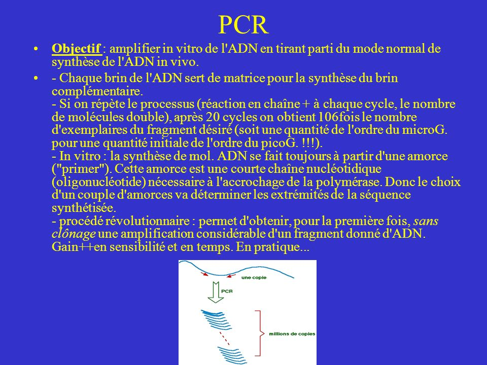 PCR Objectif : amplifier in vitro de l ADN en tirant parti du mode normal de synthèse de l ADN in vivo.
