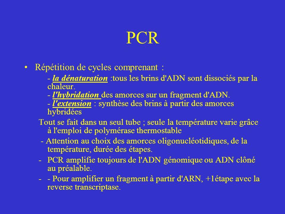 PCR Répétition de cycles comprenant :