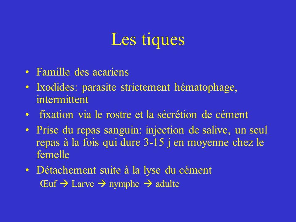 Les tiques Famille des acariens