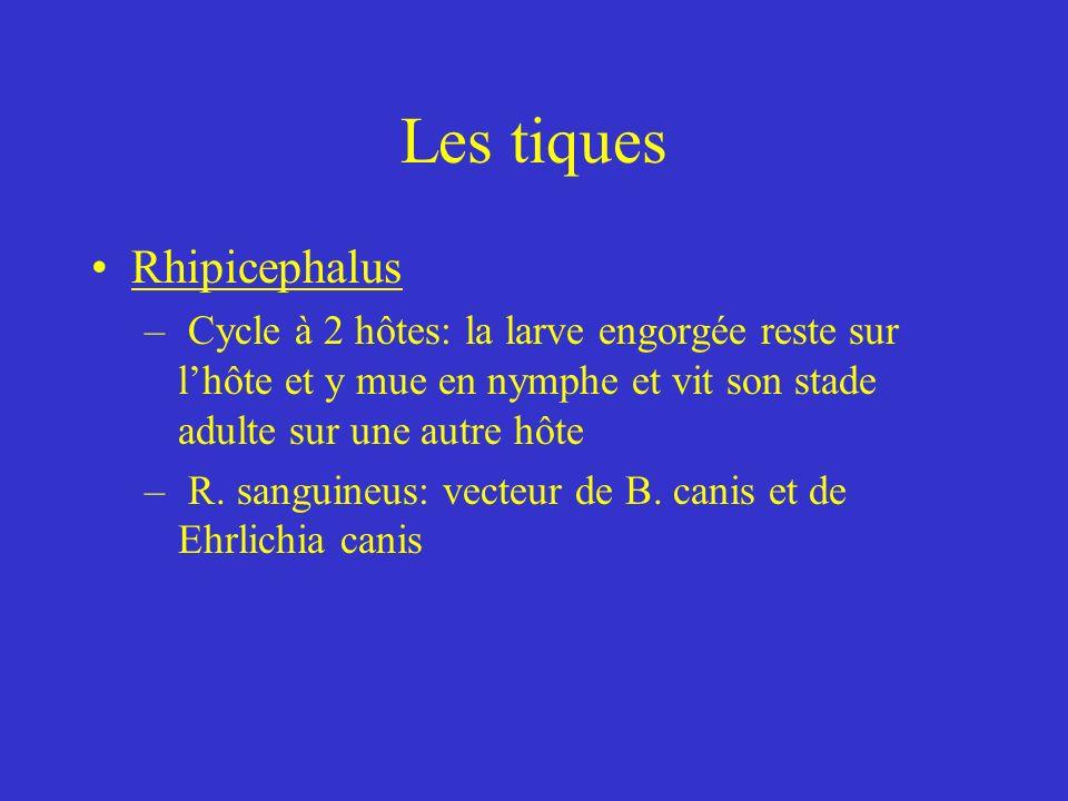 Les tiques Rhipicephalus