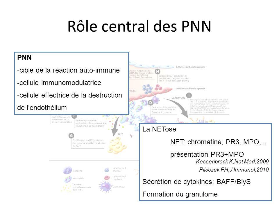 Rôle central des PNN PNN -cible de la réaction auto-immune