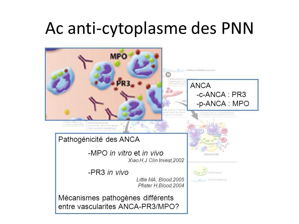 Ac anti-cytoplasme des PNN