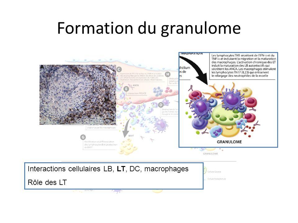 Formation du granulome