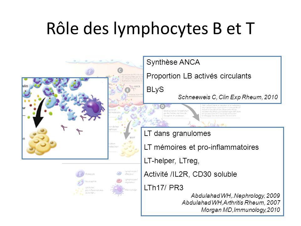 Rôle des lymphocytes B et T