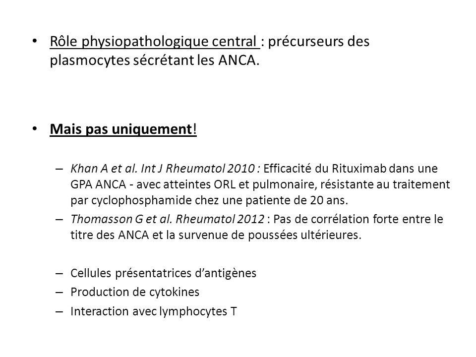 Rôle physiopathologique central : précurseurs des plasmocytes sécrétant les ANCA.