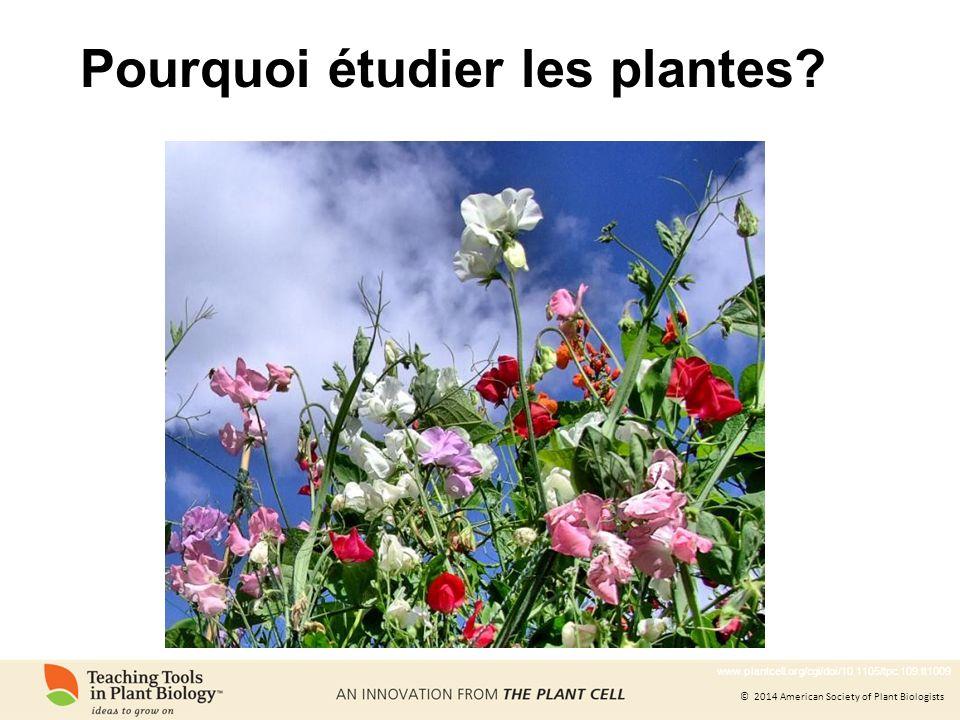 Pourquoi étudier les plantes