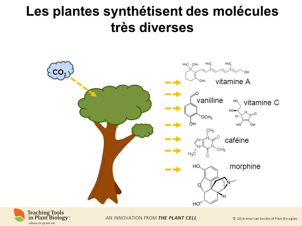 Les plantes synthétisent des molécules très diverses