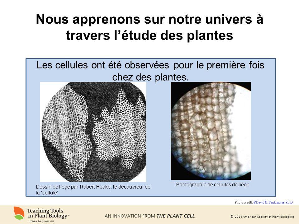 Nous apprenons sur notre univers à travers l'étude des plantes