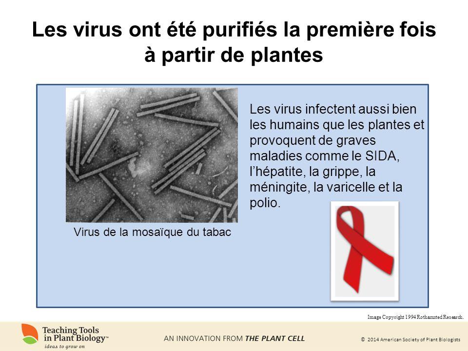 Les virus ont été purifiés la première fois à partir de plantes